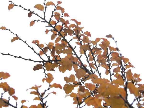 Restes d automne
