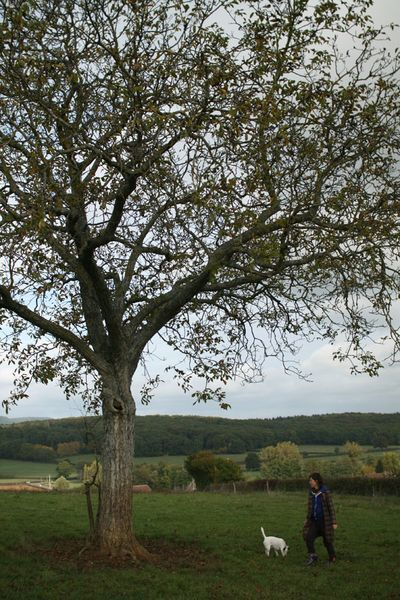 L arbre