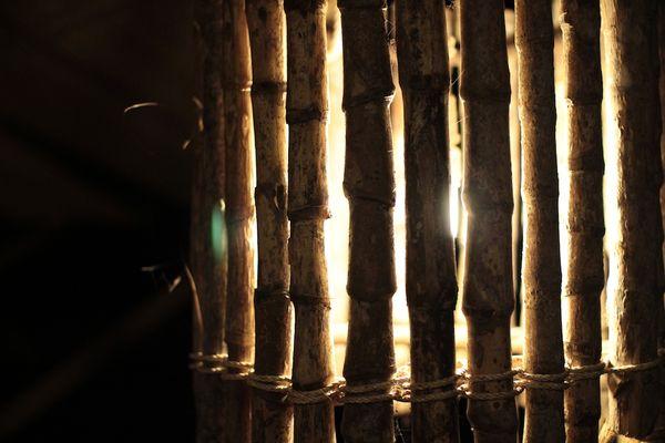 Paroi de bambou