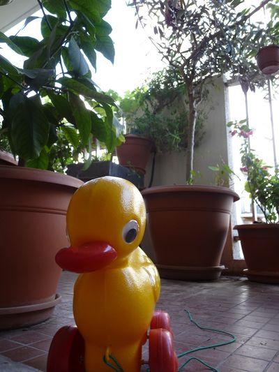 Le point de vue du canard