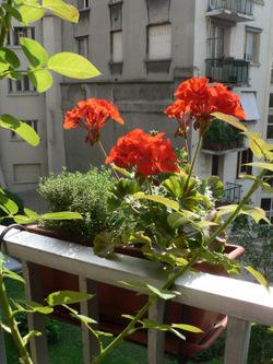 Des_plantes_faciles