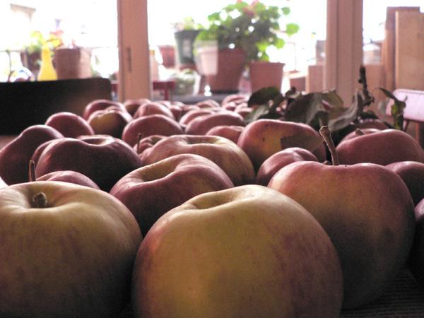 Pommes_2008