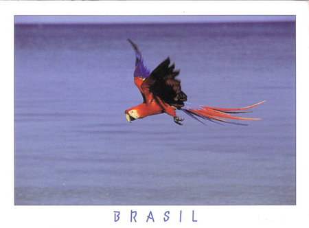 Brasiou